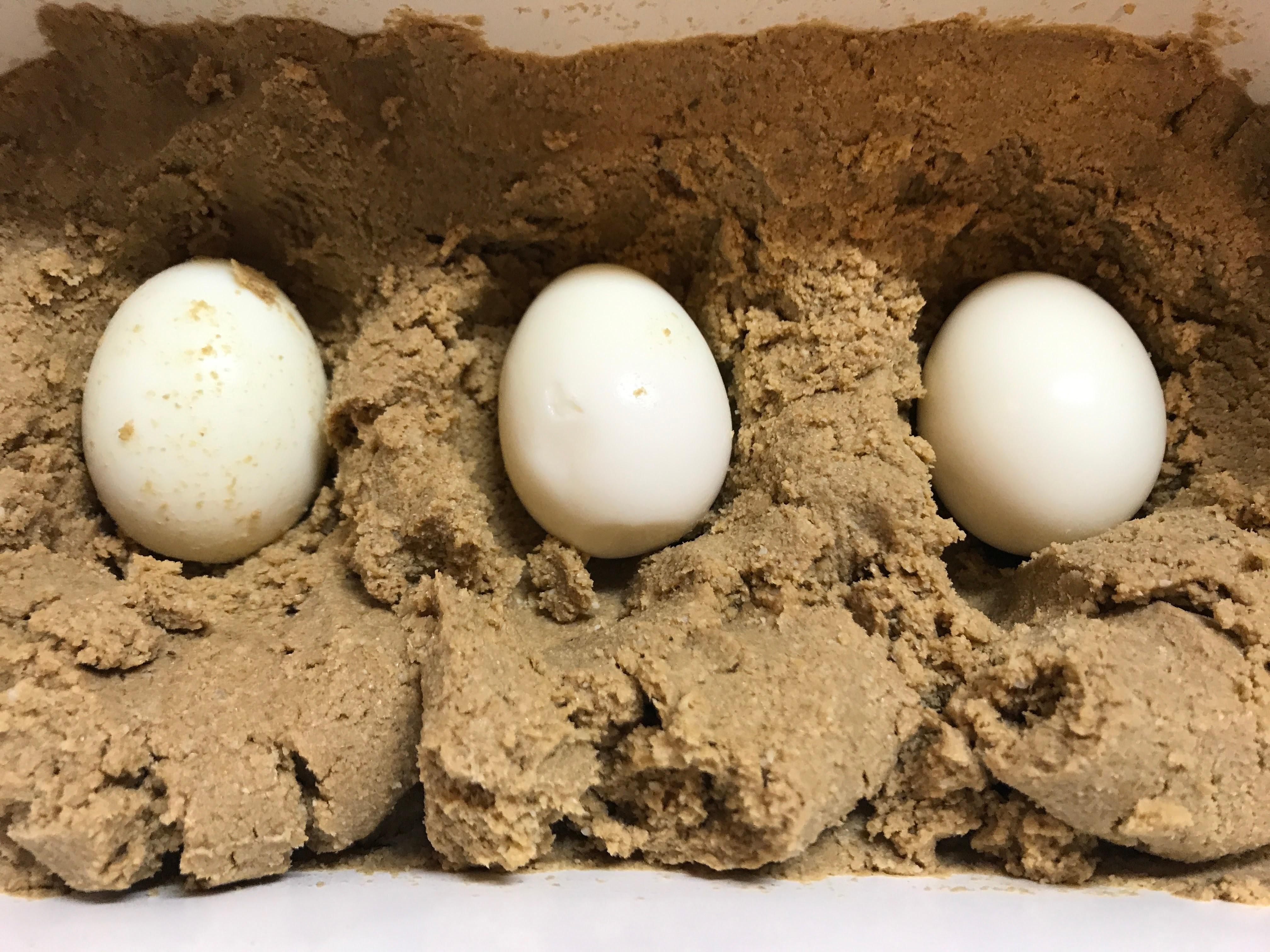 卵 ぬか 漬け ゆで